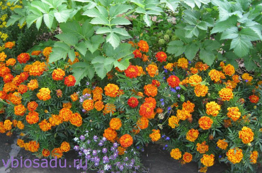 Цветы в экологическом саду Картинка
