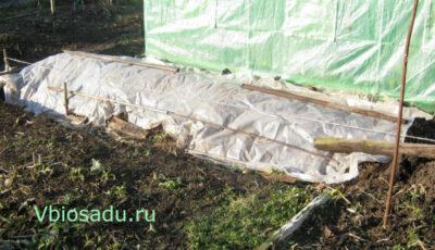 Грядка для арбузов под плёнкой Фото