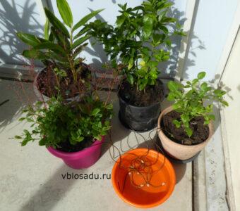Растения с системой автополива керамическими конусами. Автополив для комнатных цветов