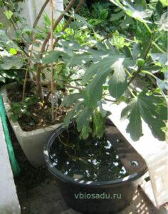 Автоматический полив деревца керамическими конусами Фото
