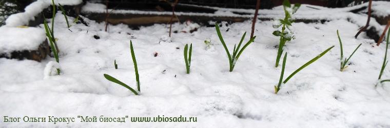 Зимний огород Фото
