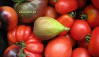 Плод инжира Фото