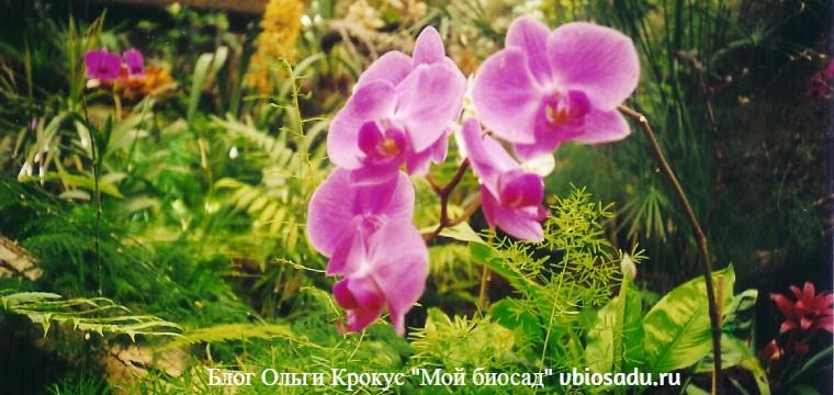 Гран Канария Орхидеи Фото