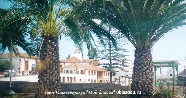 Гран Канария фото