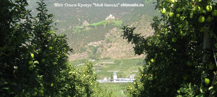 Пейзаж с яблонями в Италии