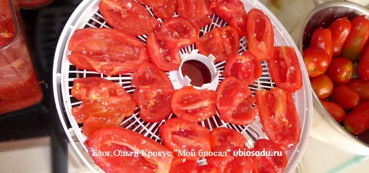 Подзимние помидоры. Сушка помидоров в электросушилке.